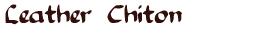 The Leather Chiton: Katharina Tunicata