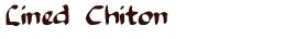 Lined Chiton: Tonicella Lineata.